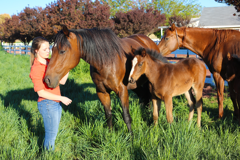 Sedona Sky Academy Horses